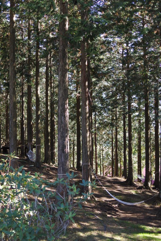 まかいの牧場ーハンモックの森