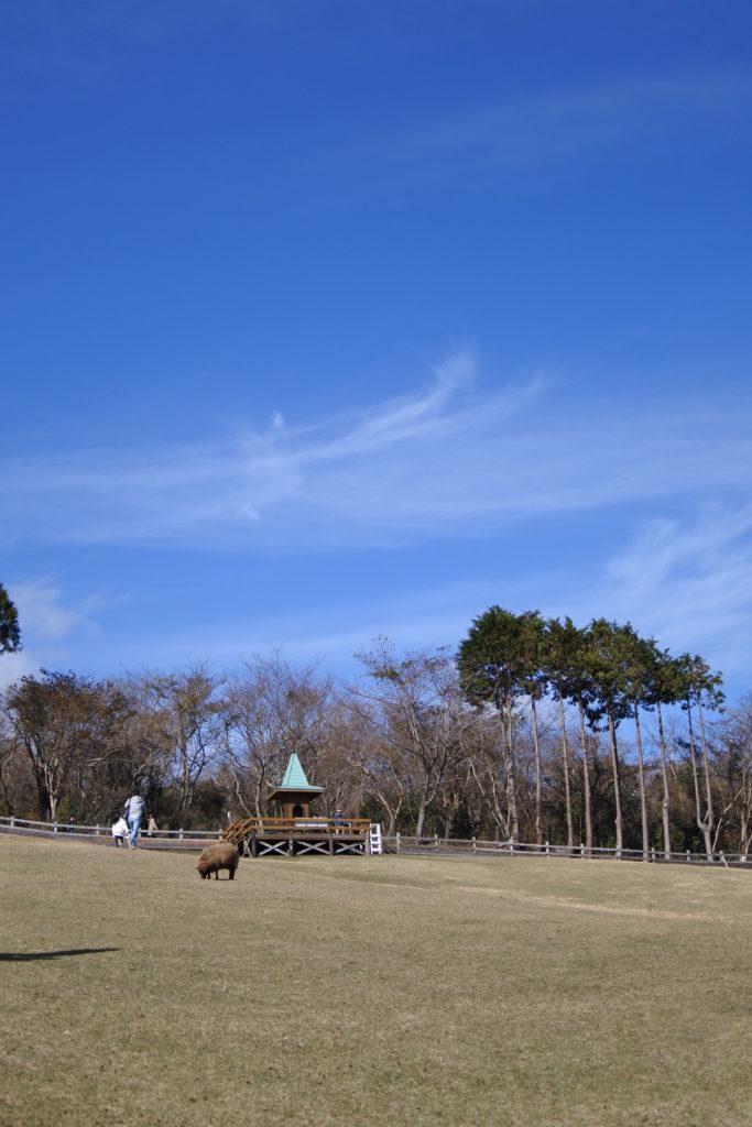 まかいの牧場ー羊の放牧場ー見晴らしの丘
