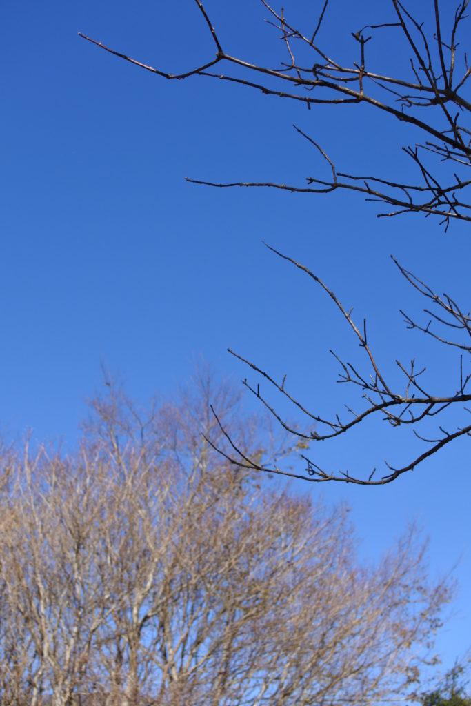 葉の落ちた木々@朝霧ジャンボリー