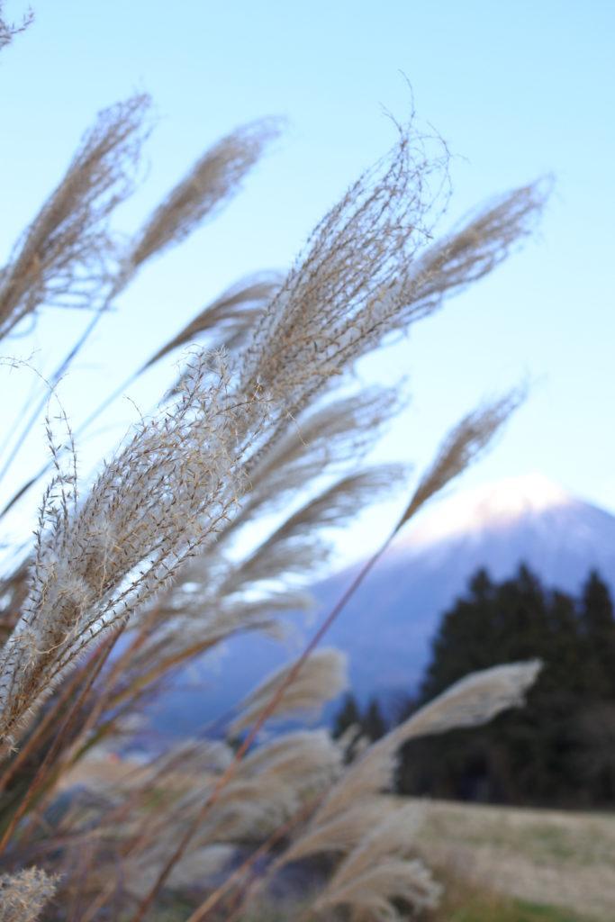 富士山YMCAでキャンプーすすき