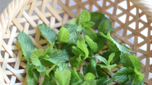 鉢植えで育てたミントの葉